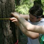 measuring circumference of a tree trunk