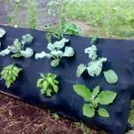 Pallet garden with vegetables