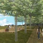 Promenade through the site between maple trees