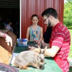 Rabbit-judging at Berkshire County 4-H Fair