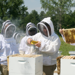Kim Skyrm, state apiary inspector, uses a smoker to calm bees