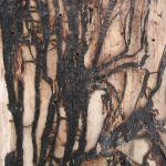 : Rhizomorphs are black, root-like structures that allow the fungus to spread through the soil in search of a new host