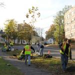 Figure 4: Volunteers planting trees downtown Northampton. Photo credit: B. Hathaway