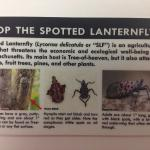 Spotted lanternfly ID card