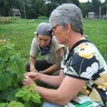 Small Fruit Extension Educator Sonia Schloemann scouts raspberries with a grower. Photo: UMass Vegetable Program