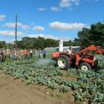 Advancing IPM on Diversified and Organic Farms