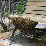 A swarm on a park bench