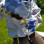 collecting bees for Nosema analysis