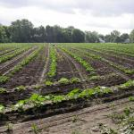 Border planting at the South Deerfield farm