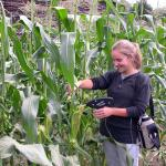 Checking corn at the South Deerfield farm
