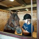 Student taking care of horse at the Hadley Farm