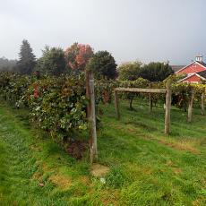 Cold Spring Orchards