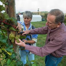 Sonia Schloemann from UMass Extension and Phil Wiley at UMass Cold Spring Orchards