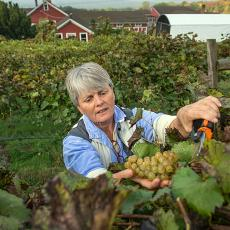 Sonia Schloemann from UMass Extension at UMass Cold Spring Orchards