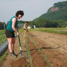 Hannah Helfner and Kristie Herman, undergraduate students, hoe weeds at the Student Enterprise Farm