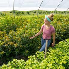 Elizabeth Kazimer checks crops in greenhouse. Photo John Solem
