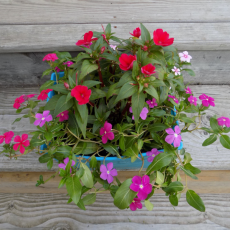 Horticulture: Floral Arrangement3