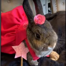 Rabbit and Cavy Costume Class