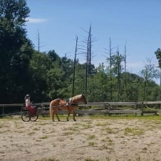 Horse and Pony: Driving Class
