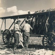 Anne and Alexander Wysocki (standing) with Sophie Wysocki (on wagon), harvesting tobacco, 1946.