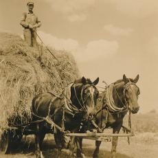 Alexander Wysocki bringing in hay, 1940's.
