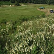 Pollinator habitat constructed near a cranberry bog in Plymouth