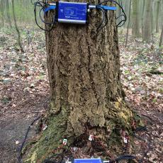 Tomography equipment on tree in Germany