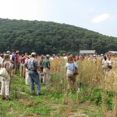 Growers attend annual barley field day to learn which type of barley will work for their brewing needs