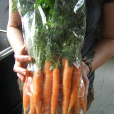 Carrots grown in winter ready for market