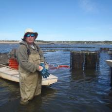 Good weather for sorting oysters