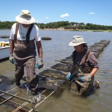 Shellfish growers checking their gear
