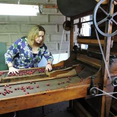 One-hundred year old cranberry separator still used today