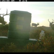 Deer feeding station on Cape Cod