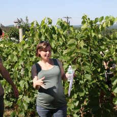 Professor Elsa Petit demostrates integration of research and extension through grape reesrach at Cold Spring Orchard
