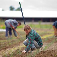 Student Farming Enterprise planting onions