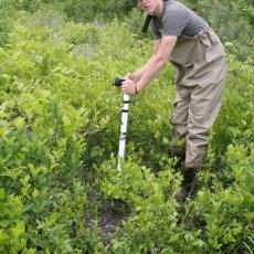Luke McInnis, a CAFE summer scholar, inserts soil moisture probe to collect data