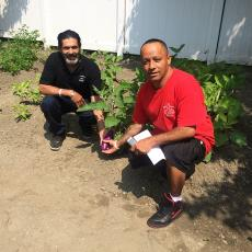Residents at Hector-Reyes House display Dominican eggplant