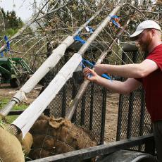 Rick Harper checks new trees for community planting