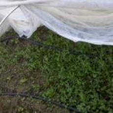 Row covers at Leaping Frog Farm