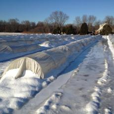 Low tunnels in snow