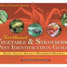 Northeast Vegetable and Strawberry Pest Identification Guide