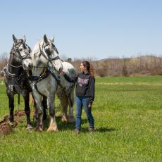 Plowing field with horses