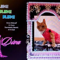 Anna Metcalf, Fantastic Beasts Club won the kitty bling award