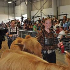Winning ribbons at show
