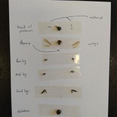 Honey Bees Under the Microscope 4