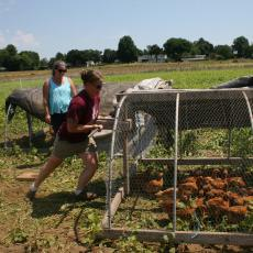 Chicken tractor moves flocks around grazing area at ALC