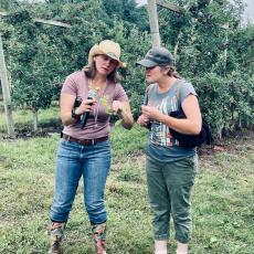 Elizabeth Garafalo demonstrates how to scot for pear psylla