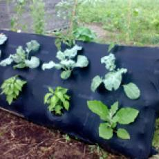 Pallet garden with vegetables