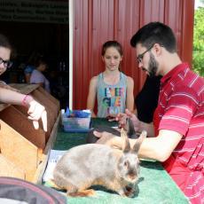 Rabbit-judging at Berkshire County 4-H Fair