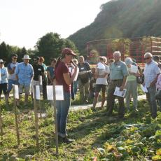 Susan Scheufele, UMass Extension educator, shares information on cucumber trials
